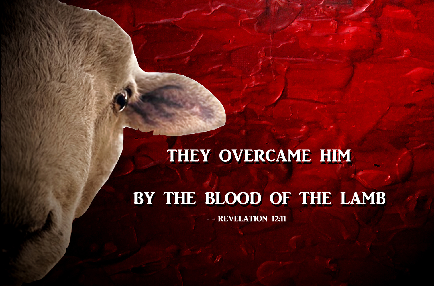 lamb with verse about blood of the lamb